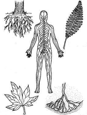 природные средства очищения организма