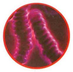 Анализ крови под микроскопом