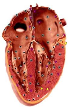 Сердце - маркеры биорезонансной диагностики
