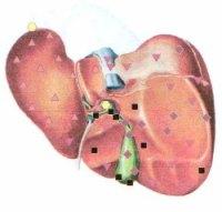 Биорезонансная диагностика печени - маркеры оберон указывают перегрузку