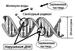 Повреждение ДНК свободными радикалами