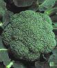 Брокколи - источник индол-3-карбинола и сульфоравана