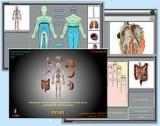 Экран монитора биорезонаансного обследования