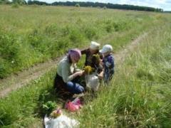 Сбор трав у дороги