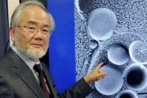 Японский биолог Есинори Осуми открыл эффект однодневного голодания